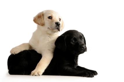 VETDOM Vétérinaires à domicile