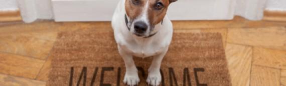 Morsure de chien: que faut-il faire ?