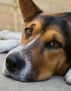 Chien Malade Vétérinaire Narbonne