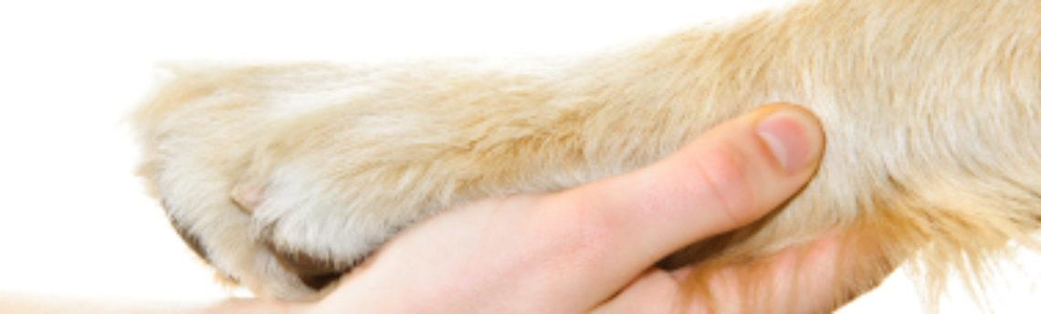 Les assurances pour chien et chat