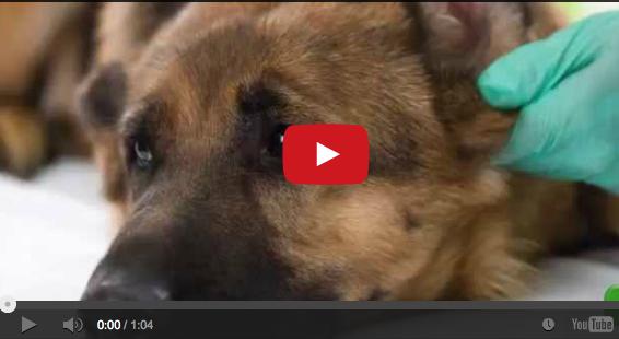 Lien video YouTube VETDOM Vétérinaire Narbonne