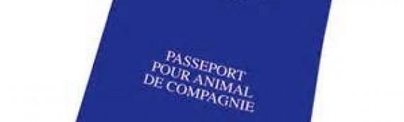Changement dans la circulation intracommunautaire des animaux domestiques