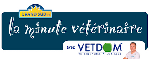la_minute_veterinaire