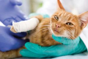 Urgences Vétérinaires Narbonne VETDOM