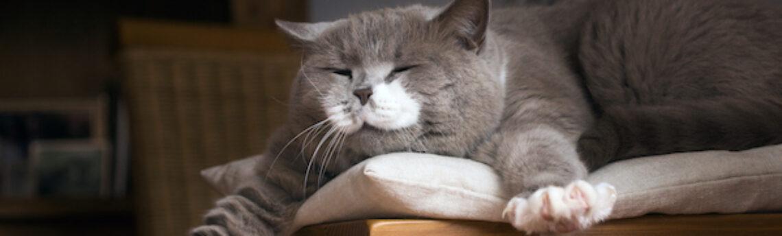 """Langage du chat: que signifie """"miaou"""" ?"""