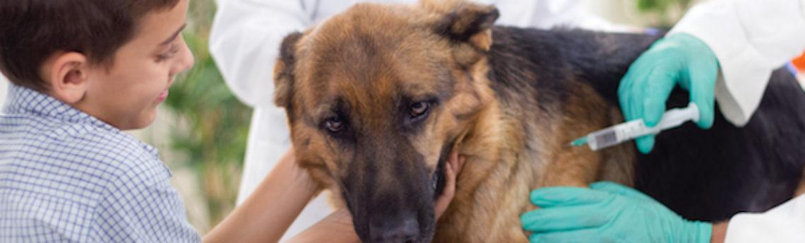 Vaccination du chien: où en est-on ?