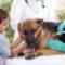 Consultation vaccinale annuelle VETDOM vétérinaire à Narbonne