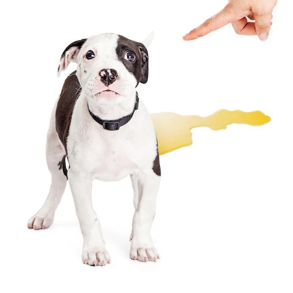 Conseils sur la propreté du chiot. Vetdom Vétérinaire à Narbonne.