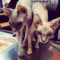 Tout savoir sur la race de chat Sphinx