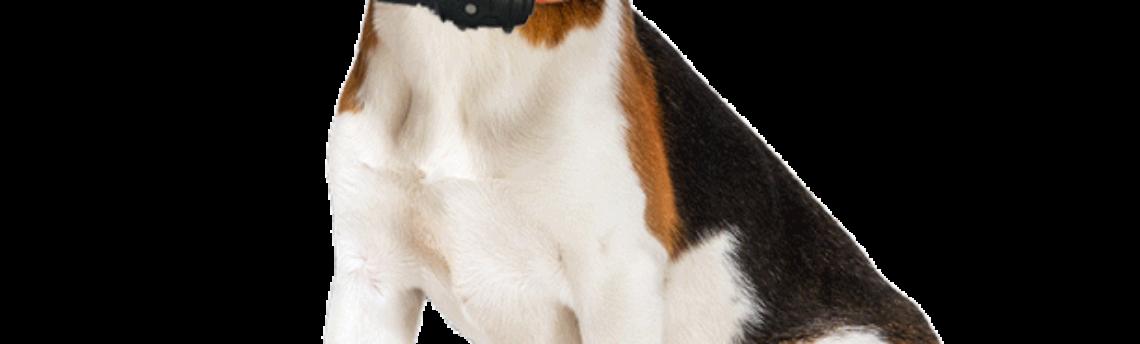 Les colliers GPS pour chien
