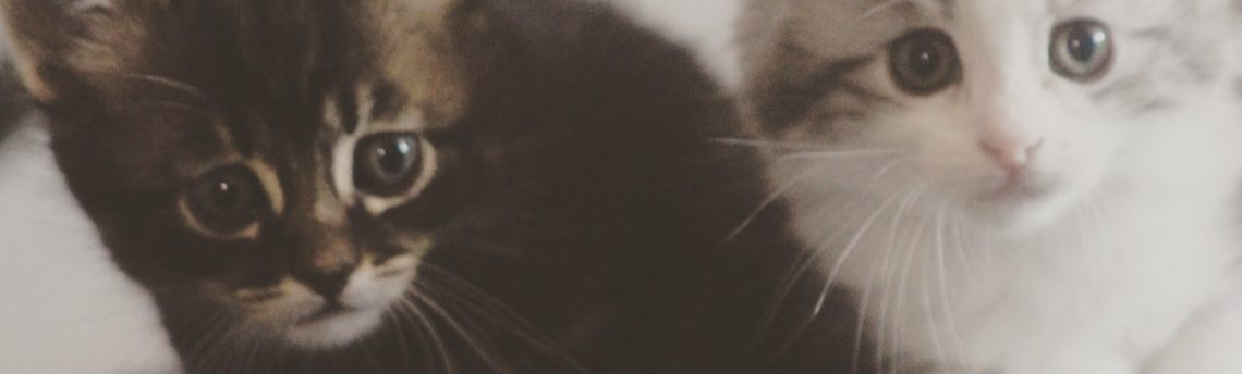 Tout savoir sur le coryza du chat