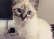 Mon chat tousse: que faire ?