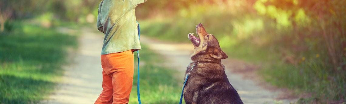 Tout savoir sur le métier d'éducateur canin