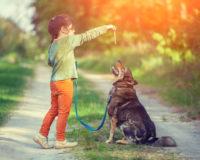 Apprendre l'ordre «Pas bouger» à son chien