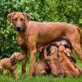 Faut-il stériliser son chien ou son chat ?