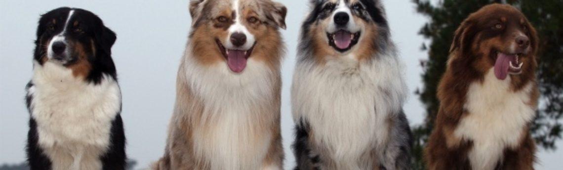 Mon chien aurait le gène MDR1. De quoi s'agit-il ?