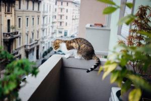 Mon chat n'a que le balcon pour sortir ? Comment s'organiser ?