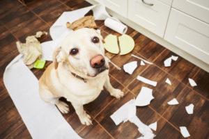 Mon chien détruit tout quand je le laisse seul. VETDOM Vétérinaires Narbonne