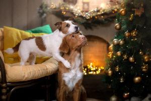 Noël et jour de l'An pour nos chiens et chats