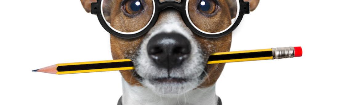 Les chiens sont-ils intelligents ?