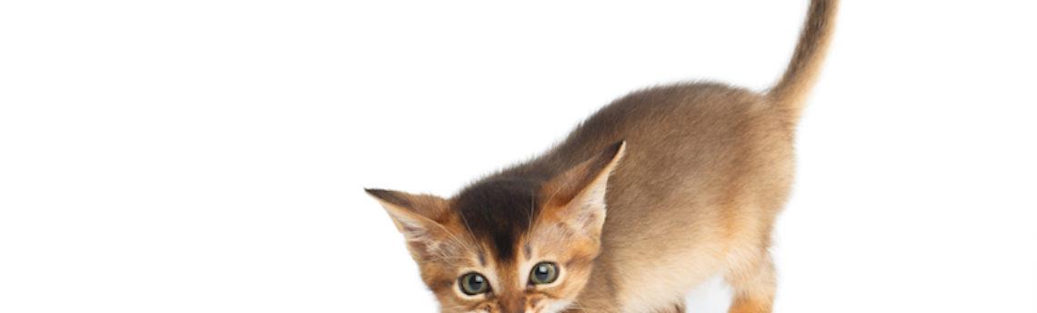 Prendre en charge des chatons non allaités.