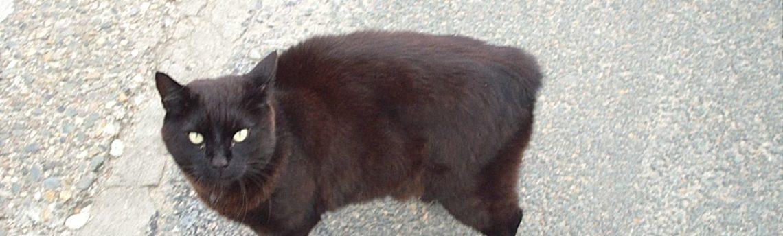 Tout savoir sur la race de chat de Manx
