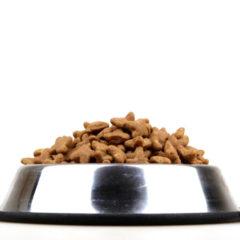 Croquettes: quelle quantité donner à son chien ?