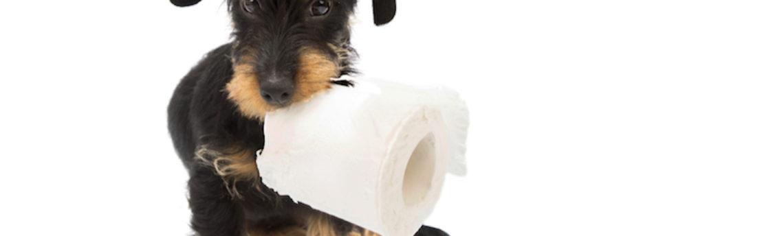 Mon chien vomit: quand dois-je m'inquiéter ?