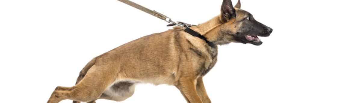 Mon chien tire en laisse: que faire ?
