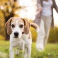 Comment faire de l'exercice avec son vieux chien ?