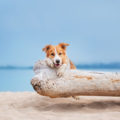 Je pars en voyage à l'étranger avec mon chien: quelles sont les formalités ?