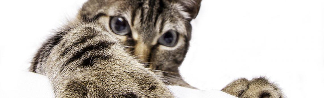 Mon chat me griffe, puis-je couper ses griffes ?