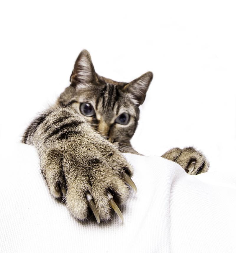 Mon chat me griffe