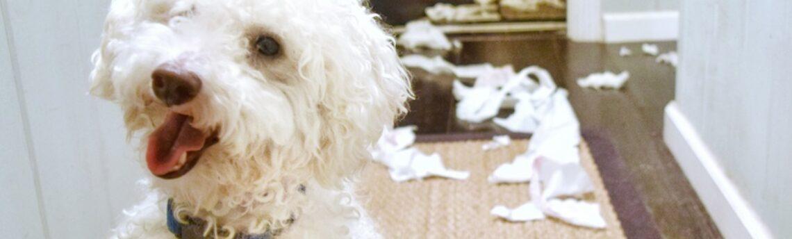 Le syndrome «Hypersensibilité – Hyperactivité»  HSHA chez le chien
