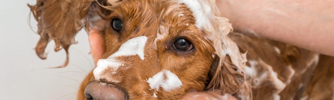 Quel shampoing choisir pour laver mon chien ?