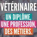 Comment devenir vétérinaire ?