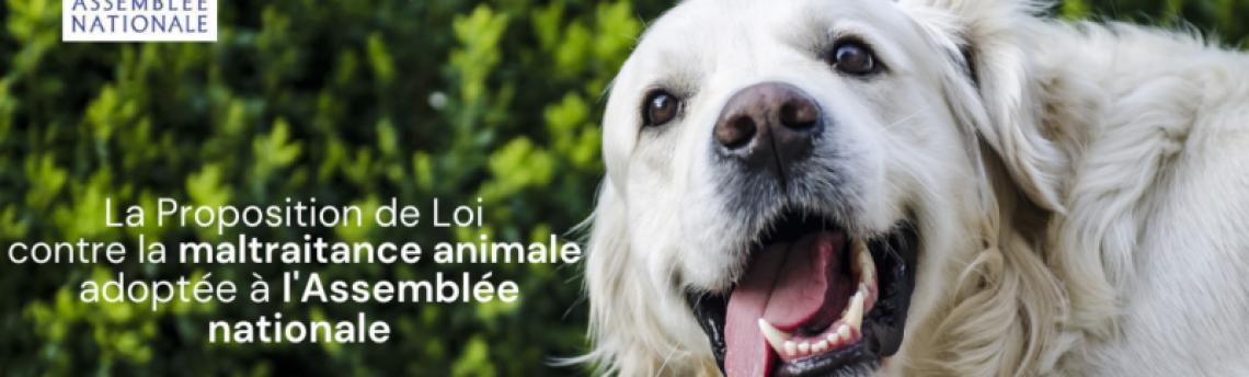 Tout savoir sur la loi sur le bien-être animal.