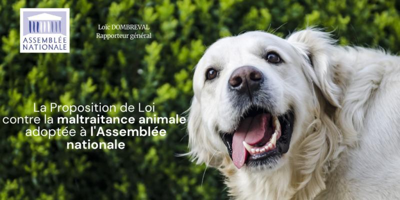Loi sur le bien-être animal